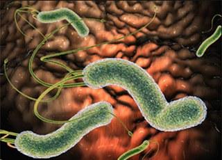 Хеликобактер пилори (латинское название- Helicobacter pylori) является спиралевидным микробом, проживающим в желудке...