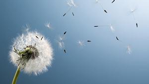 концентрация пыльцы в воздухе