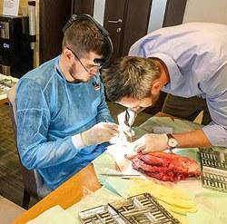 SGSDental анонсирует новый обучающий курс для стоматологов-хирургов-имплантологов