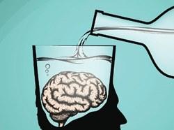 Как быстро стареет мозг, если регулярно употреблять алкоголь