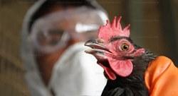 КНДР сообщает о первом в мире случае заражения человека птичьим гриппом нового вида