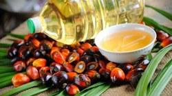 Ученые не считают пальмовое масло вредным продуктом