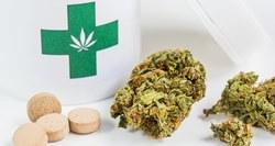 В Великобритании впервые разрешили лечить эпилепсию медицинской марихуаной