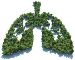 Экологи назвали страну с самым чистым воздухом