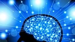 Результаты исследования: Тестостерон блокирует мозговую деятельность у мужчин