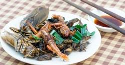 Для профилактики рака ученые советуют есть насекомых