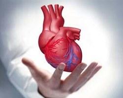 Израильские ученые первые в мире напечатали полноценное сердце на 3D-принтере