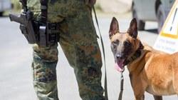 В Германии cлужебных собак научат распознавать коронавирус